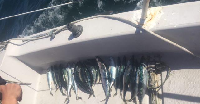 Une très belle journée de pêche en mer
